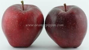 apples images (12).jpg