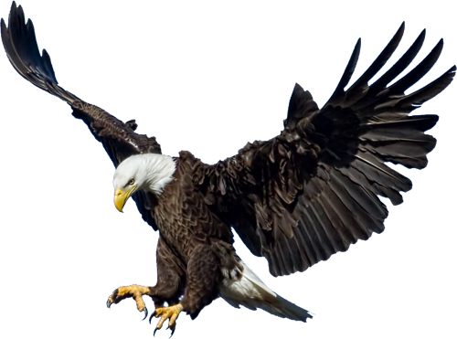 11-2-eagle-png-3.png