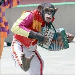 monkey-accordion.jpg